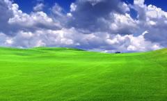 Terrain verdoyant - Horizon