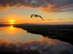 Horizon - Oiseau