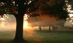 Arbre et matin