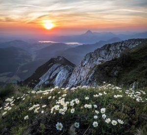 Soleil - Montagnes - Fleurs