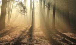 Rayons de soleil dans un bois