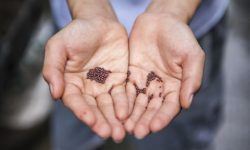 Mains avec semences par Joshua Lanzarini (unsplash.com)