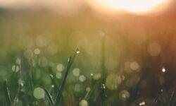 Herbe et rosée du matin par Aaron Burden (unsplah.com)