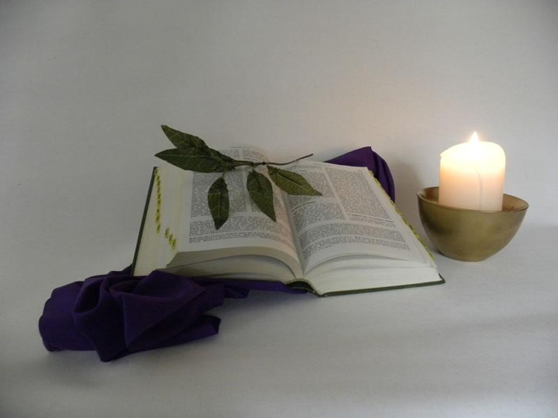 Bible, lumière, feuilles