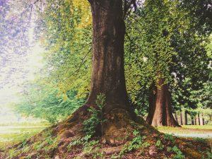 Arbre, racines par Izabella Szymanski