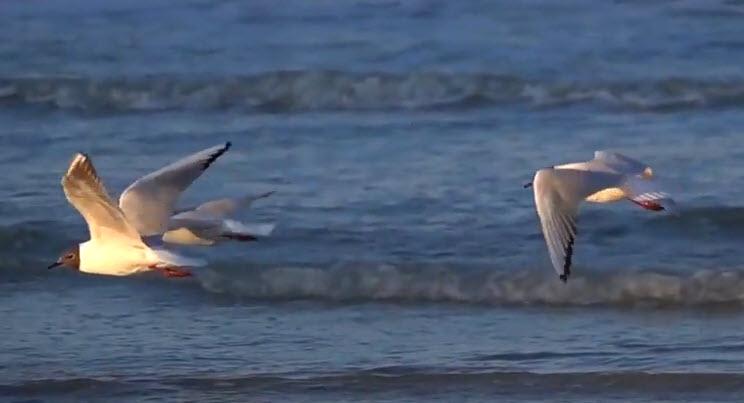 Vol d'oiseaux au-dessus de mer