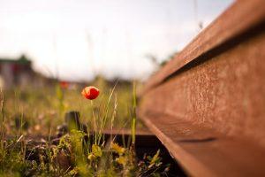 Fleur et chemin de fer par Clement Falize (unsplash.com)
