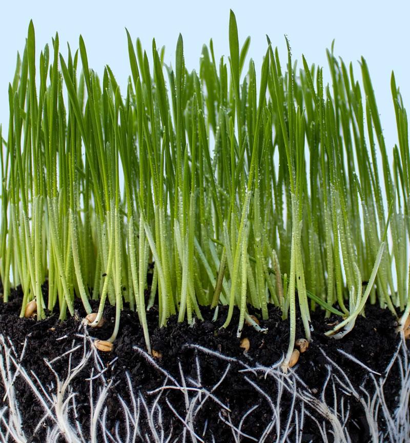Herbe et racines